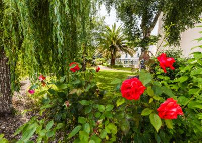 Hotel-Aigue-marine-2019-Jardin-Roses-Palmier-Vue-vers-la-piscine-Minis-299-400x284